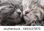 Couple Happy Kittens Sleep...