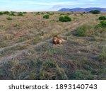 Safari In The Masai Mara...