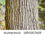 The Rough Textured Bark Of A...