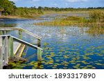 Kayak Launch In A Marshland In...