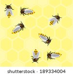 honeycombs and  bees  vector...
