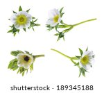 Strawberry Flower Isolated On...