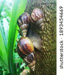 Many Snails Perched On The...
