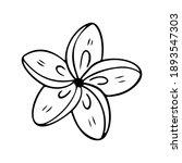 plumeria flower outline....   Shutterstock .eps vector #1893547303