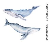 Whales Watercolor Illustrations ...