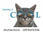 A Cat Wears Sunglasses With The ...