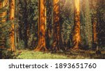 Giant Sequoia Trees Woodland Panoramic Photo in California Sierra Nevada Mountains. - stock photo