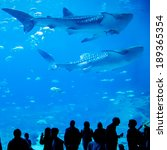 whale sharks swimming in... | Shutterstock . vector #189365354