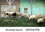 Sheep in front of a rural house - stock photo