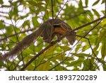 Agile Squirrel Climbing A Tree