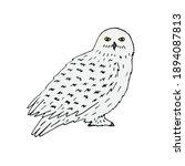 vector hand drawn doodle sketch ... | Shutterstock .eps vector #1894087813