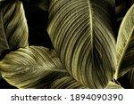 Tropical Banana Leaf Texture In ...