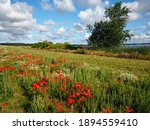 Beautiful Spring Landscape With ...