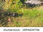 A Lawn In The Garden  Where A...