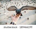 Yong Man Feed Pigeons On...