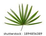 Lady Palm Leaf On White...