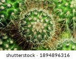 Macro Top View Of Cactus Plant...