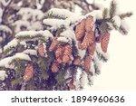 Winter Background. Evergreen...