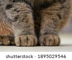 Close Up View Of Cat's Paws On...