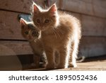 Two Curious Kittens In Sunlight ...