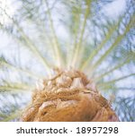 looking up the trunk of a...   Shutterstock . vector #18957298