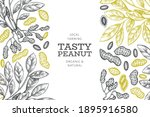 hand drawn peanut branch and...   Shutterstock .eps vector #1895916580