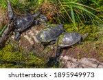 riparian scenery showing tree sunny illuminated water turtles