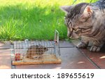 Cat And Captured Mouse In A...