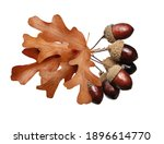 dried acorns with leaf isolated ... | Shutterstock . vector #1896614770