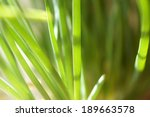 bright grass in the spring... | Shutterstock . vector #189663578