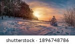 Panoramic view of sunset over winter landscape with covered in snow pine and fir trees against dramatic evening light. Snowy Baltic sea coast.