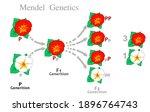 mendel genetics. first and... | Shutterstock .eps vector #1896764743