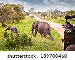 elephants family on pasture in... | Shutterstock . vector #189700460