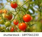 Red Cherry Tomatoes Fruit ...