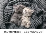 Small photo of Couple cute kittens in love sleeping on gray soft knitted blanket. Cats rest napping on bed have sweet dreams. Feline love friendship on valentine day. Comfortable pets sleep at cozy home. Top view