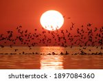 Silhouette Of A Flock Of Black...