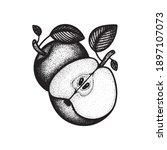 apples. engraving style apples...   Shutterstock .eps vector #1897107073