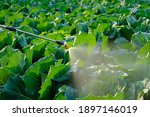 Sprayer Spray Insecticide And...