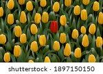 unique different flower stands... | Shutterstock .eps vector #1897150150