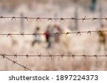 Old Rusty Barbed Wire On The...