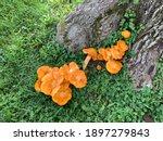 Bright Orange Jack O Lantern...