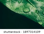 Water Drops On Green Leaf And...