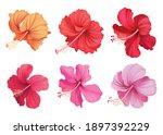 Beautiful Hibiscus Flowers On...