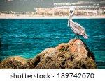 Pelican   Baja California ...