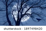 Silhouette Of Crow Illuminated...