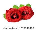 Two Red Rose Flower  With...