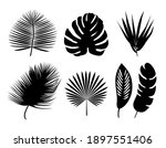 set of palm leaves silhouette.... | Shutterstock .eps vector #1897551406