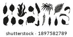 black silhouettes of tropical... | Shutterstock .eps vector #1897582789