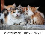 Stray Cats On The Streets Of...