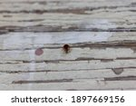Close Up Red Ladybug On  Wooden ...